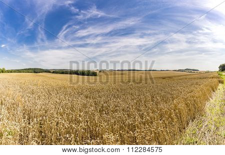 Hdr Panorama Of A Wheat Field And Dramatic Sky