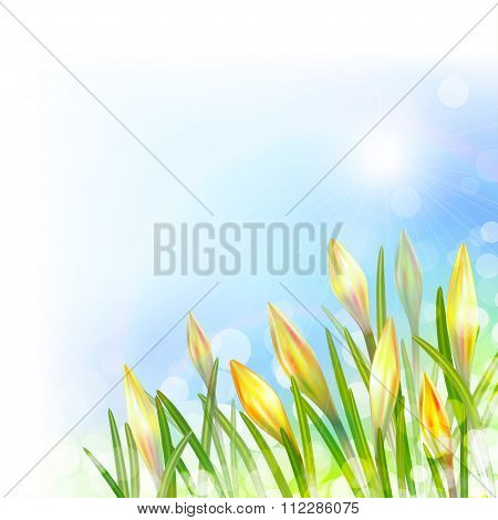 Spring Background With Yellow Flowers.