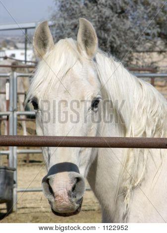 Horse Portrait Through Rail