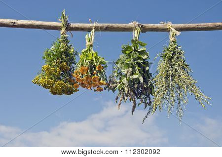 Medical Herbs Hanged To Dry Outside