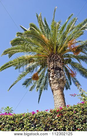 Palm Tree On Sunny Day