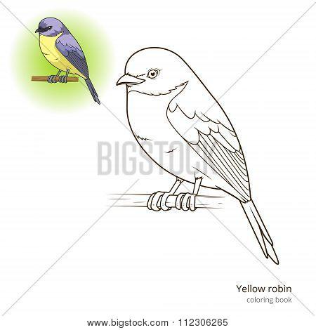 Yellow robin bird coloring book vector