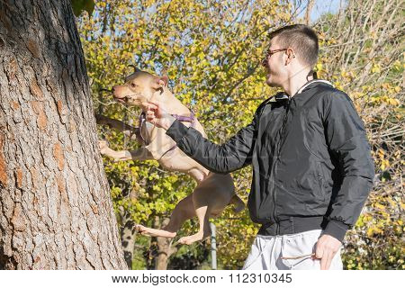 American  Staffordshire terrier jumping on a tree to reach a branch.