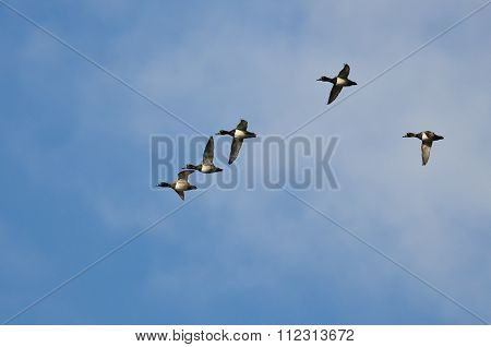 Flock Of Ring-necked Ducks Flying In A Blue Sky