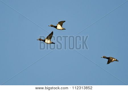 Three Ring-necked Ducks Flying In A Blue Sky