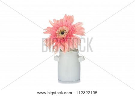 Flower On The Vase, Isolated White Background.