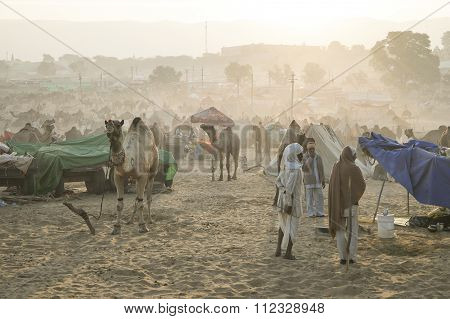 Pushkar, India-nov 22, 2015:camel And Camel Trader An Early Morning During Camel Fair In Pushkar.