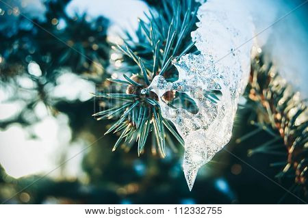 Spruce with a transparent ice