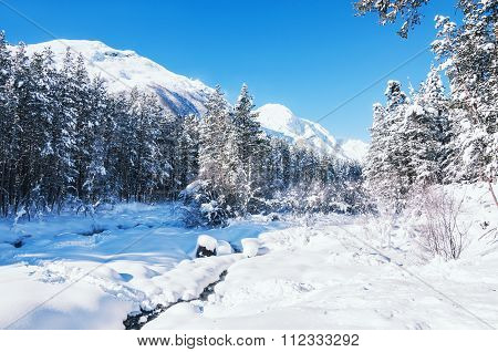 Winter Forest And Mountains After Snowfall