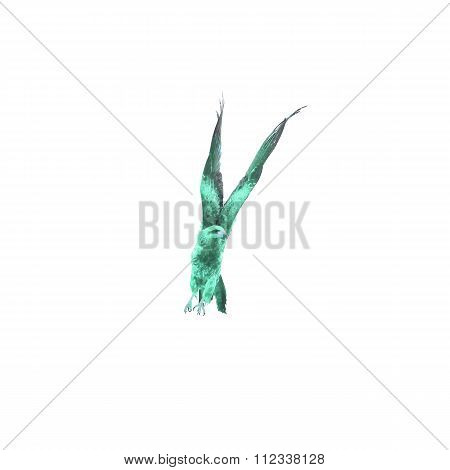 Green Falcon (black Kite) Bird Flying In The Sky Isolate On White Background