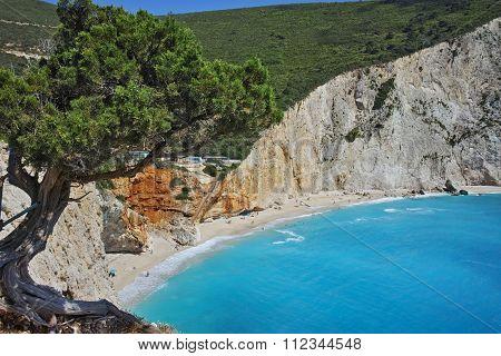 Tree over Porto Katsiki Beach, Lefkada, Ionian Islands
