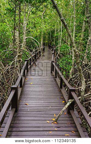 Wooden Bridge To The Jungle,prachuap Khiri Khan,thailand