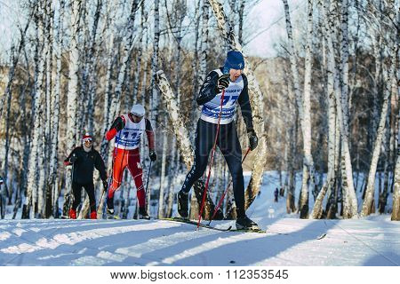 group skiers classic style in a winter birch forest
