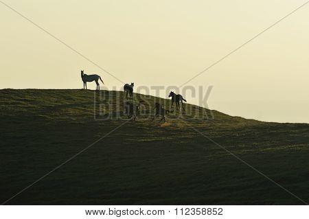 Horses Run On Field