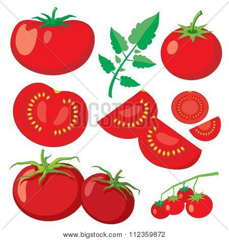 Vector fresh tomatoes in flat style