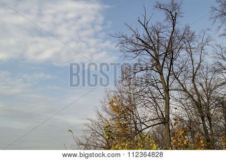 Trees without leaves and the sky in the fall
