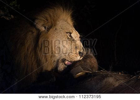 Lion At Night