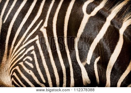 Natural Texture Of The Skin Of An African Zebra.