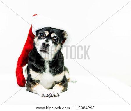 Dog Wearing Christmas Stocking - Left Side