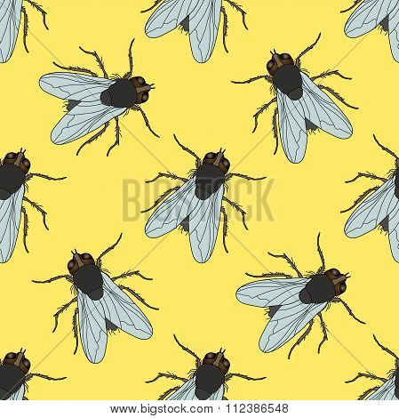 Seamless Pattern With Fly. Musca Domestica . Hand-drawn . Fly. Vector