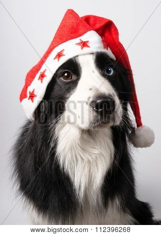 A dog in Santa's cap on light background