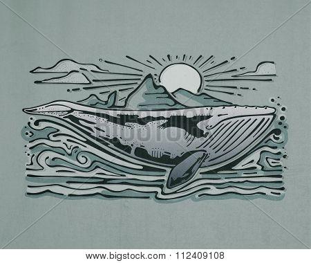 Gray Whale Illustration
