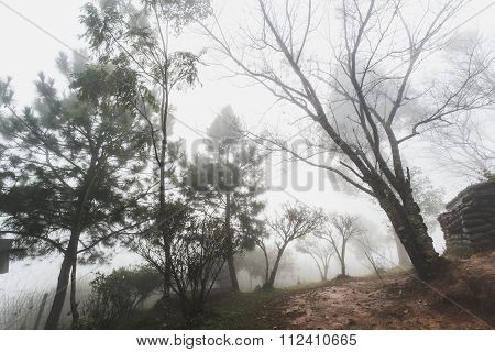 Forests at frontier Thai - Myanmar with hazy fog in winter