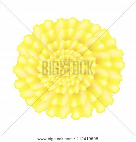 Yellow Marigolds Flower On A White Background