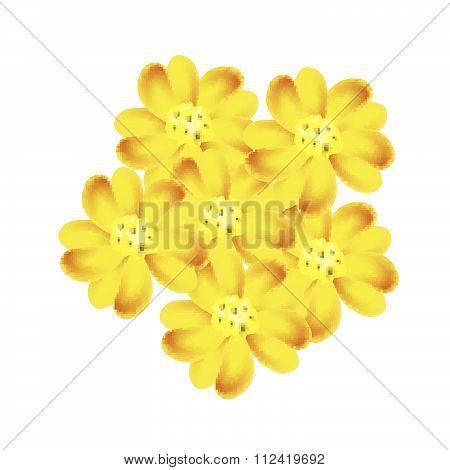 Yellow Yarrow Flowers Or Achillea Millefolium Flowers