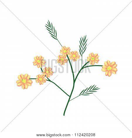 Blossoming Of Orange Yarrow Or Achillea Millefolium Flowers