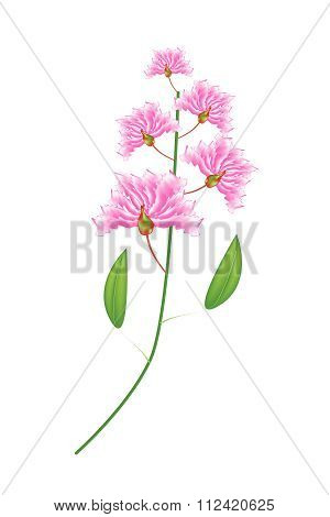 Bunch Of Pink Crape Myrtle Flowers On White Background