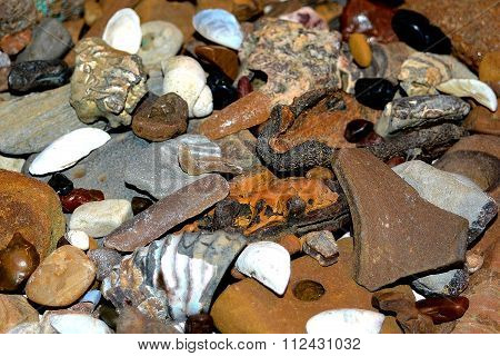 river stones rakushki.okamenelye trees and shellfish taken from the river