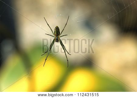 Spider On Spider Web In Nature