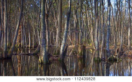 North Carolina River
