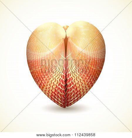 Heart Shaped Seashell, Isolated On White.
