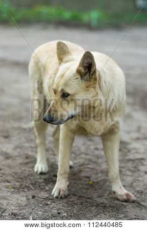 Street dog hesitate to attack