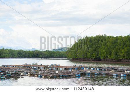 Coop Fish Of Thailand Sea
