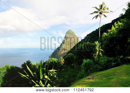 Piton And Palm Tree