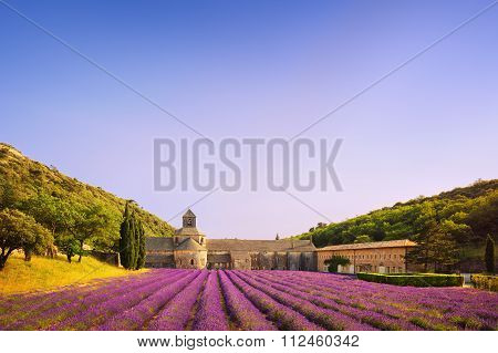 Abbey Of Senanque Blooming Lavender Flowers On Sunset. Gordes, Luberon, Provence, France.