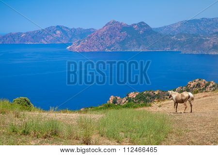 Horse Grazing On The Coastal Hills Of Corsica