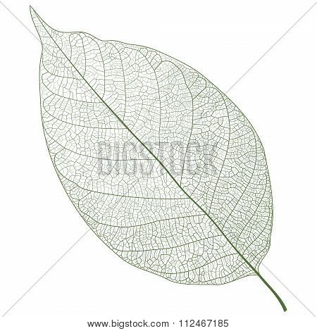 Vector Realistic Leaf Veins Closeup Pattern Background