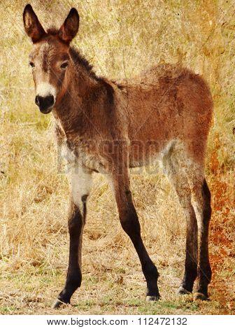 Little Brown Foal