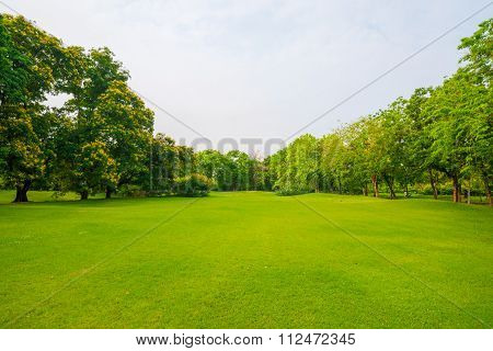 City Park With Green Grass Field