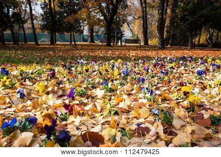 Flowers In Fallen Leaves