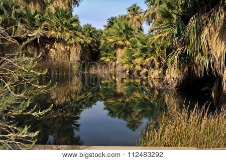 pond with palm trees