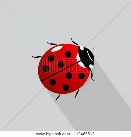 icon ladybird.