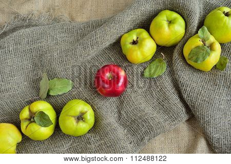 One Red Apple Among Quince On The Background Of Burlap