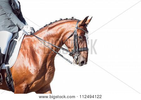 Bay horse: dressage - with clipping path