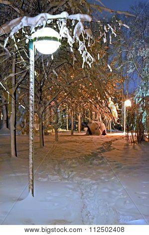 winter alley with night illumination, street-lamp power