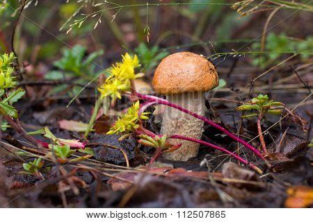 Nice mushroom